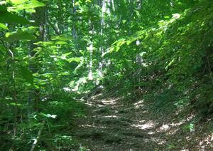 Ascutney trail